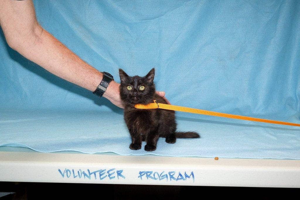 Kitty-Volunteer-Downey-Animals-1400-DSCF3852.jpg
